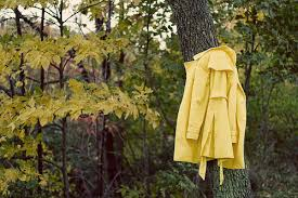 Take off your coat Yellow Coat on tree